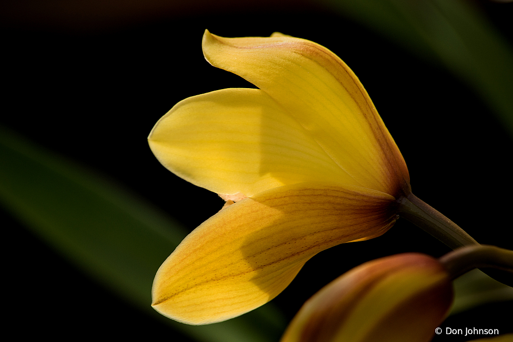 Yellow Flower Back 2-24-20 197