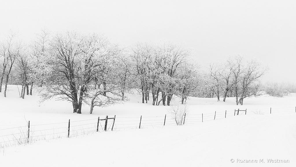Snow fog in the grasslands