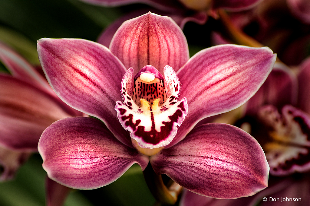 Special Orchid 2-24-20 172