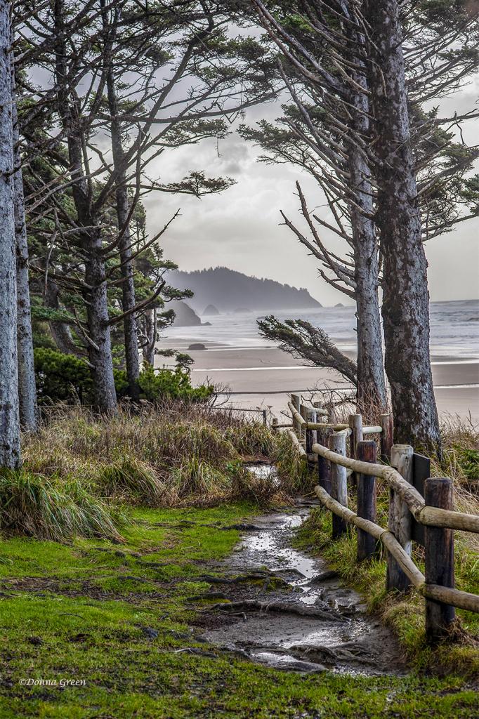 A Perceptive View - Oregon Coast