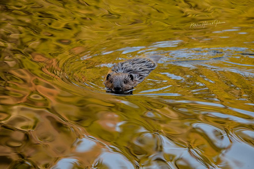 Sunset On The Beaver Pond!