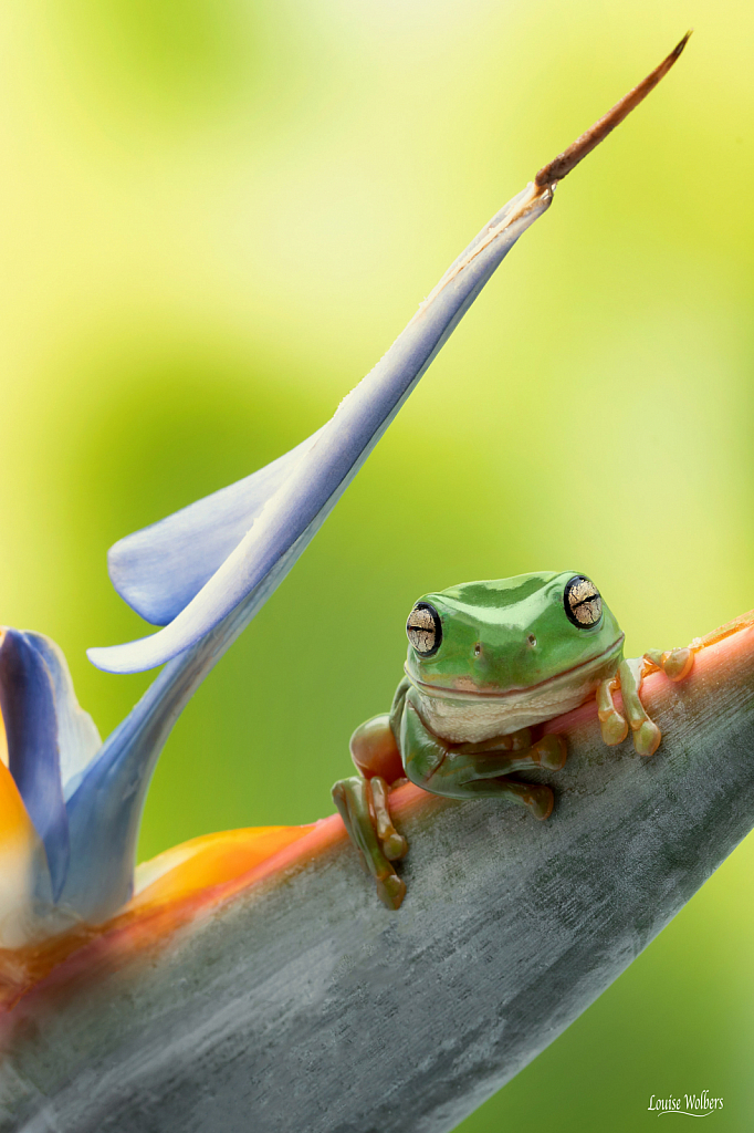 Frog in Paradise