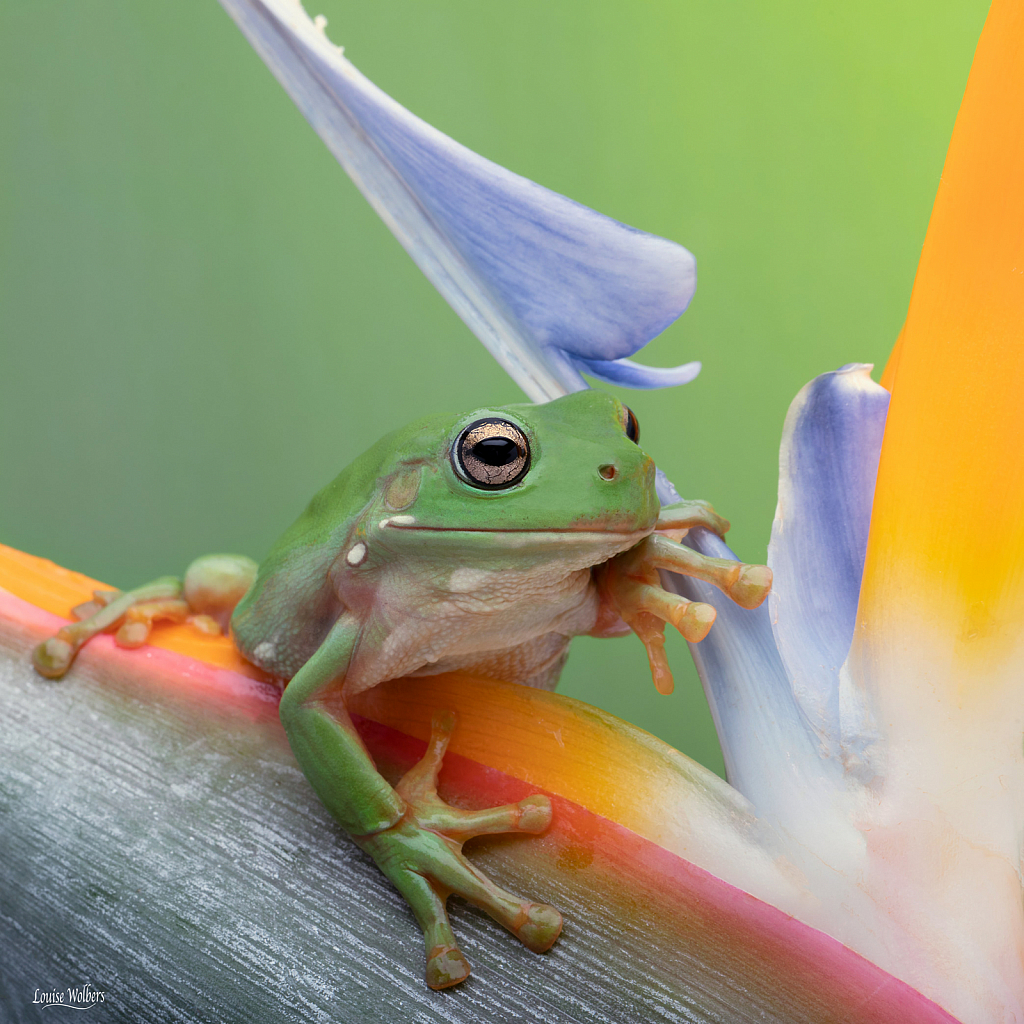 Frog In Paradise 2