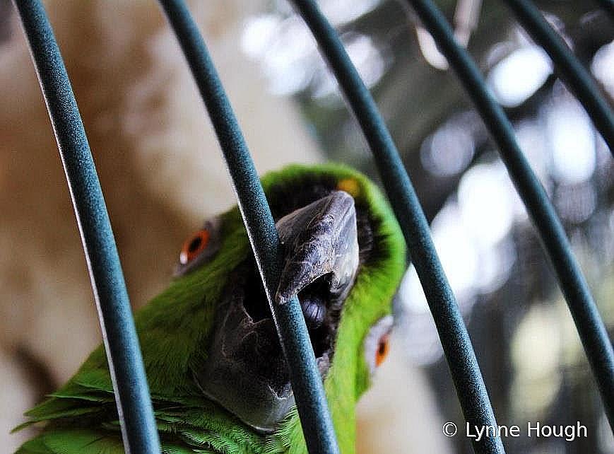 Dad's Bird