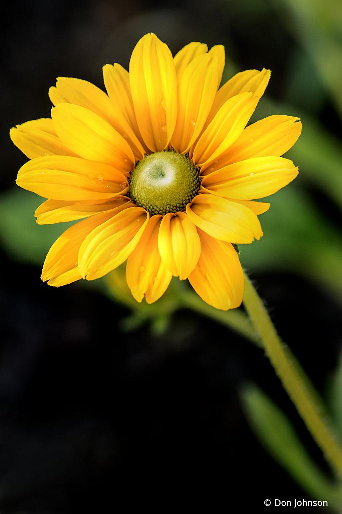 Wonderful BSG Daisy 6-7-20 113