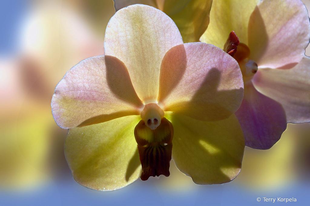 Fosters Botanical Garden Honolulu