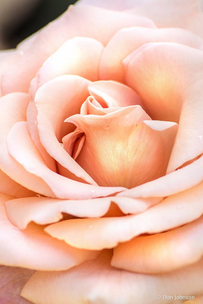 BSG Light Pink Rose 6-7-20 262
