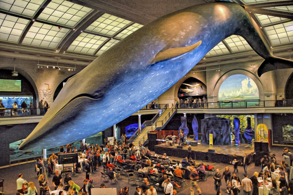 The Whale In the Museum