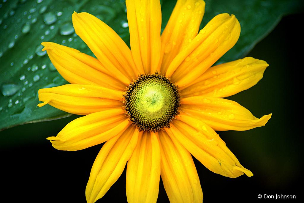 Amazing BSG Daisy 6-7-20 152