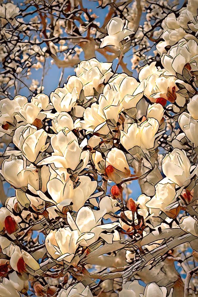 Bloomin' Whites