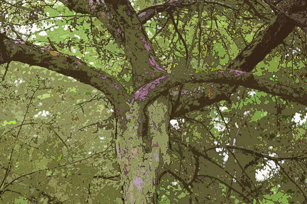 Tree Knot -