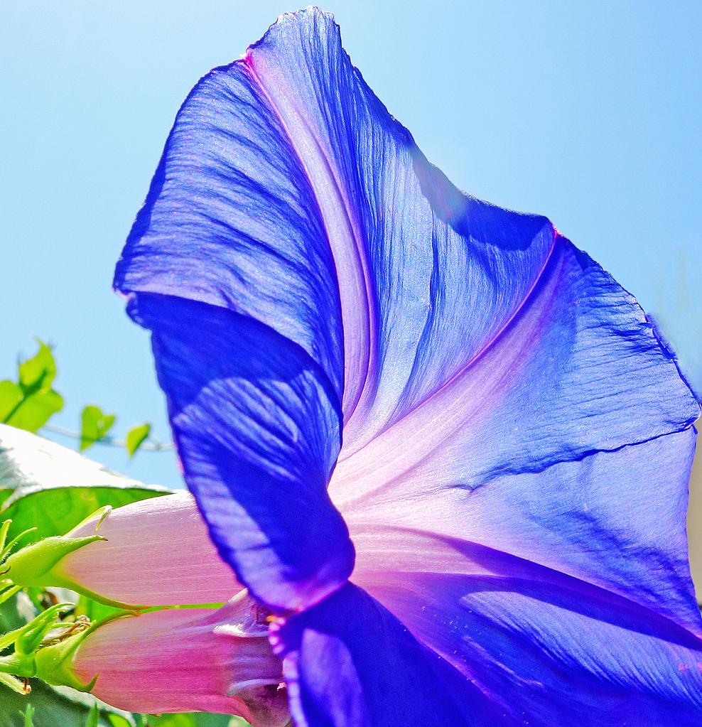 Purple beauty.