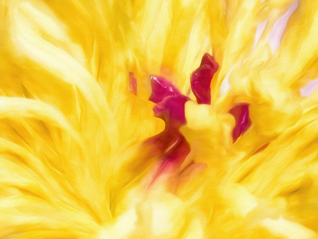 A Pink and Yellow Floral Abstract
