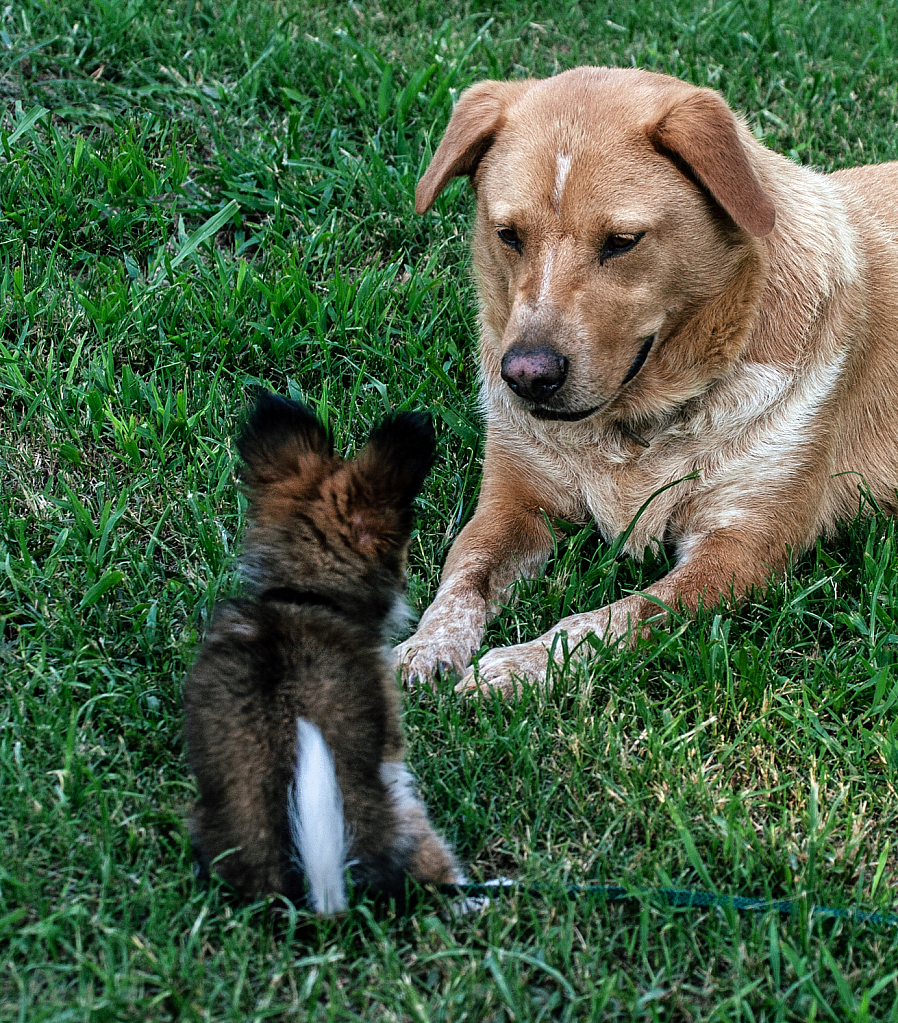 Meeting the New Puppy