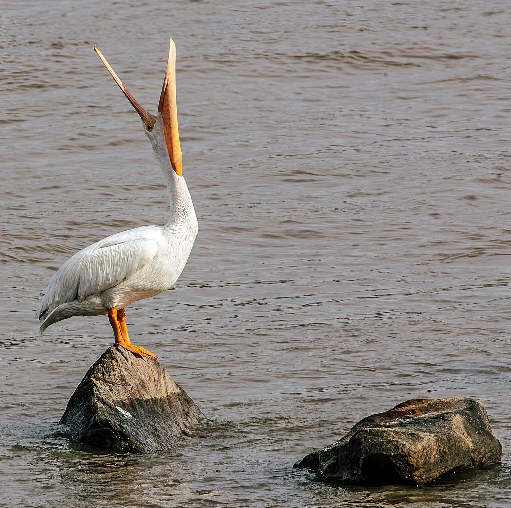 Pelican Exercise