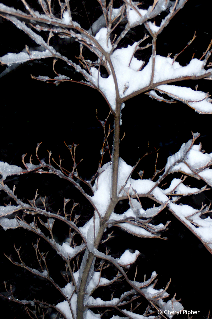 Snow Covered Branch in Nearly Black & White