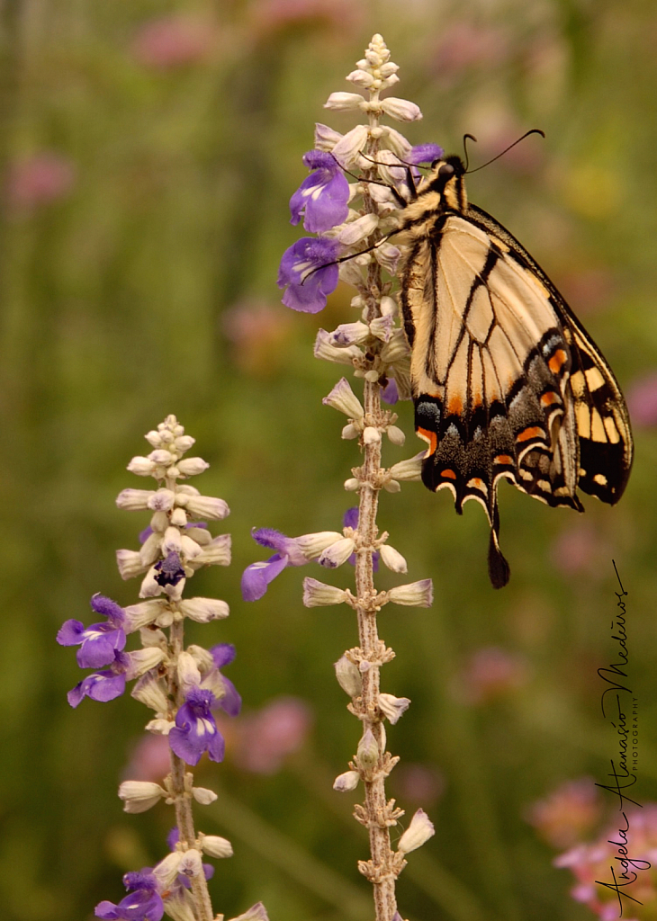 Butterfly Haven
