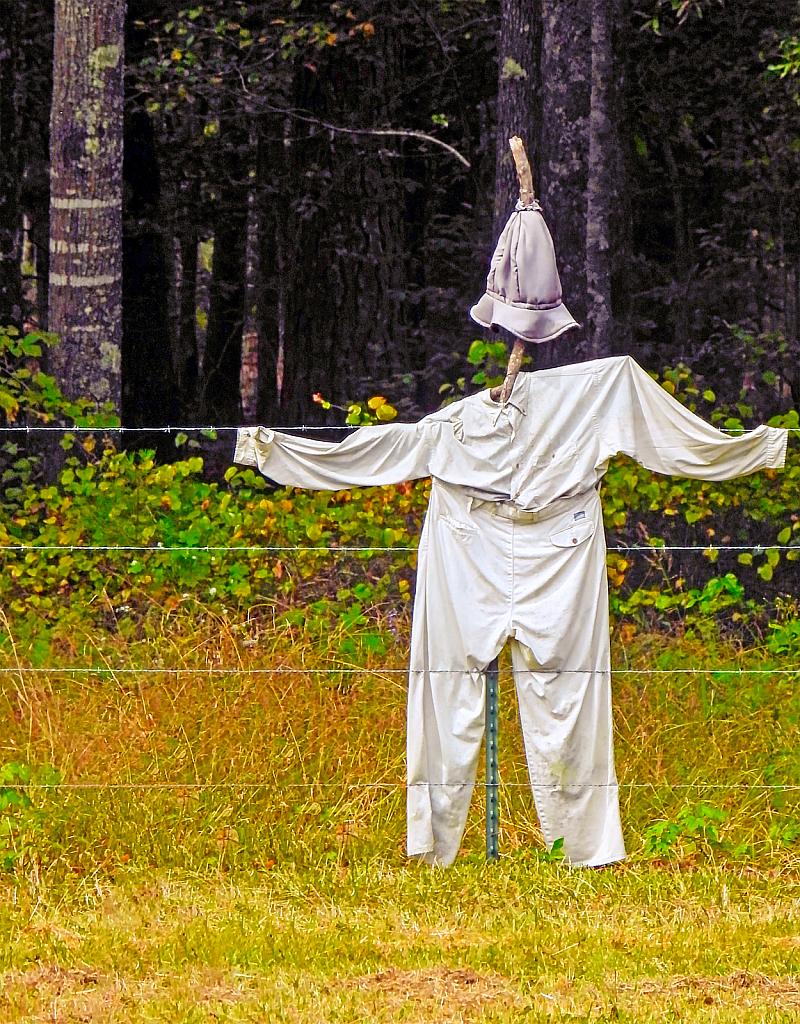 Arkansas Scarecrow