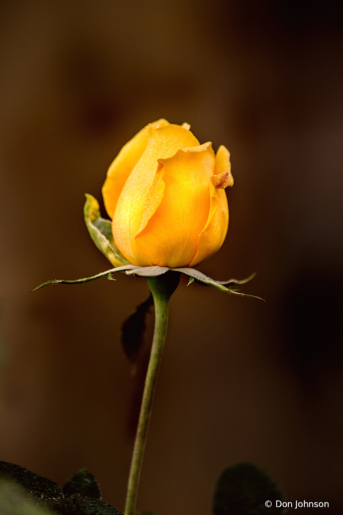 A Rose Bud Alone 10-9-20 115