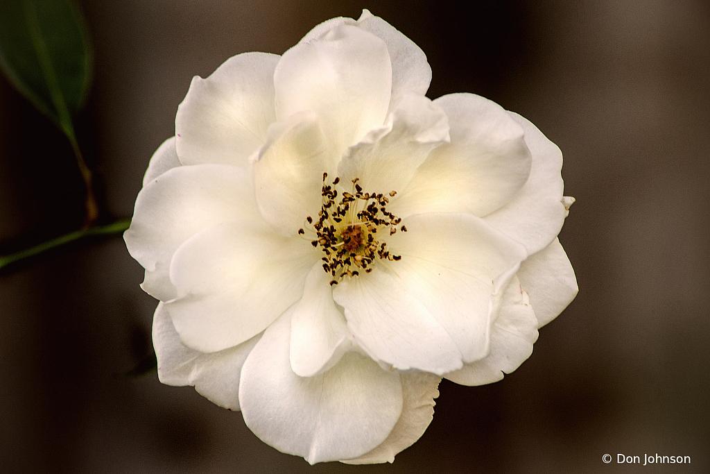 All White Rose 10-9-20 122