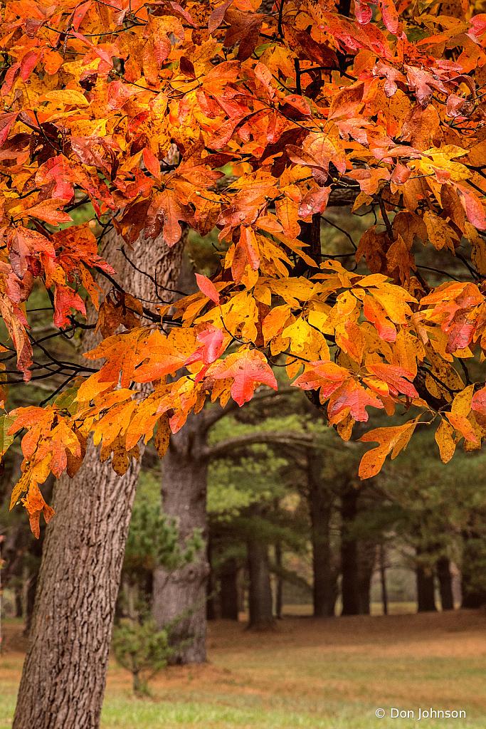 Seasonal Colors 10-27-20 056