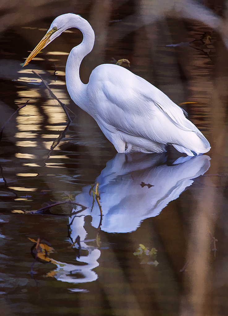 Egret with nice water