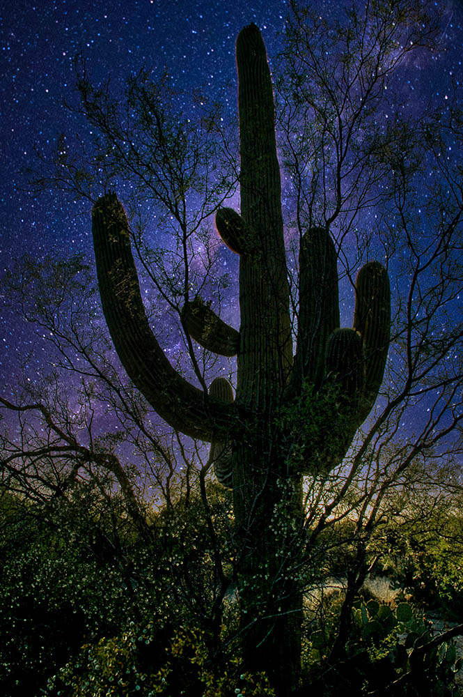 Cactus On a Starry Night