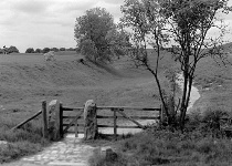 Tree, Path and Kissing Gate