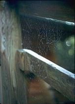 Early Morning Web