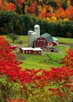 Hillside Acres Farm #4