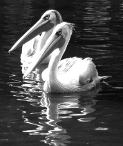 Gliding Duet