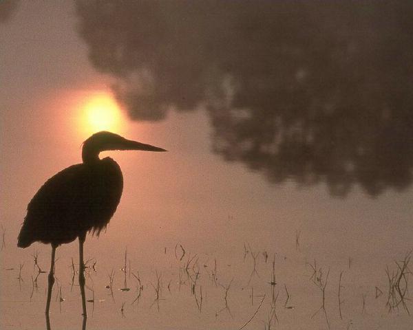 Sunrise and Serenity