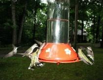 lots of humming birds!