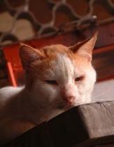 Meowch