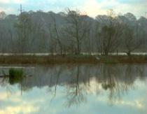 Egret Marsh Hwy 90 South