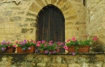 Flowers in La Roque
