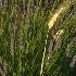 2Wheat in Lavender - ID: 3747 © Jim Miotke