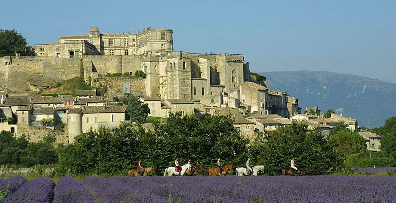 Grignan Horses and Lavender Field - ID: 3753 © Jim Miotke