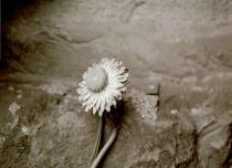 Flower Against Wall