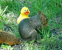Spiff and the Squirrel