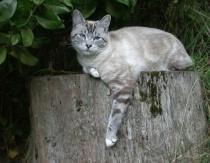 Cat on a stump.