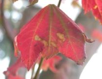 Colors of the Season.