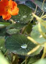 Inpenetrable Leaves