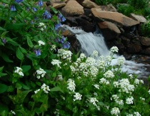Beauty By The Stream