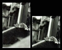 Renzo's Cat