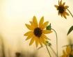 Jubilant Sun