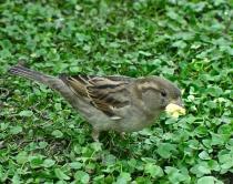 Disneyland Popcorn Bird