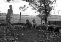 Leaf Gathering Trio