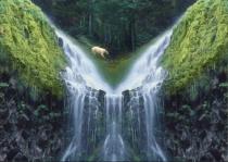Kermodei (Spirit Bear)