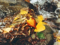 """""""Water Over Autumn Leaves"""""""